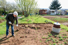 Man Preparing Ground To Grow Own Vegetables In An Allotment Garden