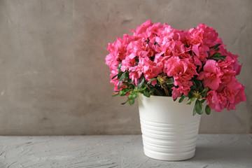 Lonac s prekrasnom cvatućom azalejom na stolu