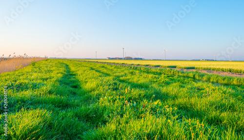 Foto op Plexiglas Groene Field with flowers below a blue sky in sunlight at sunrise in spring