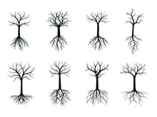 Black Shape Of Tree Without Leaves And Roots. Vector Illustration.