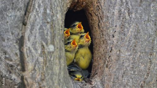 Hungry Birds Fototapete