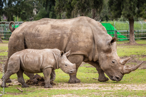 In de dag Neushoorn Wild african animals