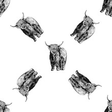 Seamless Pattern Of Hand Drawn Sketch Style Highland Cattle Isolated On White Background. Vector Illustration.