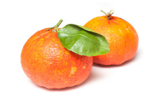 Closeup Of Two Hybrid Orange F...