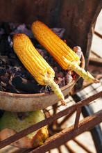 Corn Cobs On The Grill. Close-...