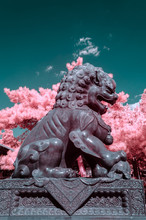 Bronze Lion In The Summer Palace Of Beijing,in Infrared Light