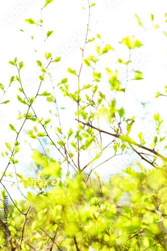 Poster Printemps Green leaves in springtime, nature background