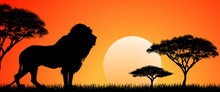 Big African Lion. Silhouette O...