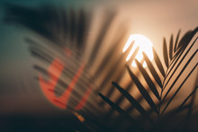 Palm Leaves On Sunset