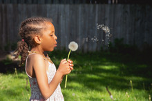 Portrait Of A Pretty Young Girl Of Mixed Race Blowing A Large Dandelion Puff Flower, And The Seeds Flying In The Air.