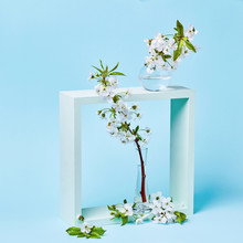 Blooming Cherry Branch In A Glass Vertical Transparent Vase, Sta