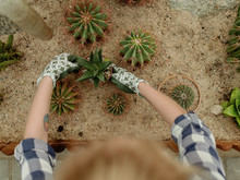 Woman Arranging Pots With Cactuses