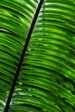 Exotic And Lush Palm Leaf Details