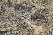 Detail Of A Dried Up Stream Bed