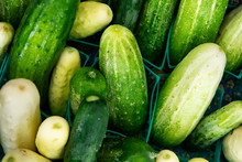 Market: Freshly Picked Cucumbers For Sale