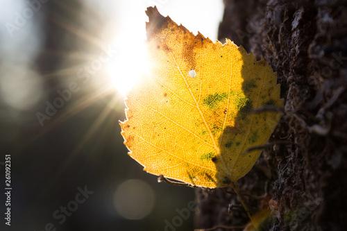 Fotografie, Obraz  Herbstblatt im Gegenlicht