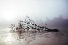 Fallen Tree In A River Surrounded By Morning Mist