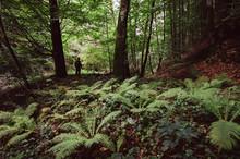 Dark Silhouette In Green Forest