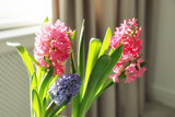 Blooming spring hyacinth flowers near window at home