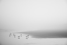 Seagulls On Misty Kure Beach In North Carolina, USA