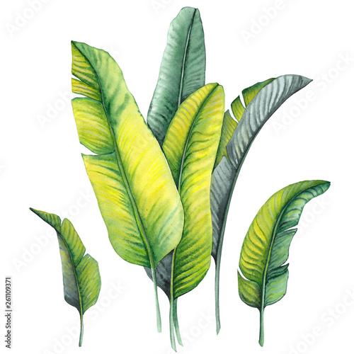 Pinturas sobre lienzo  Set of tropical banana leaves