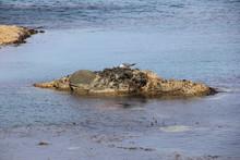 海上の小さな岩場にいるウミネコ(北海道)