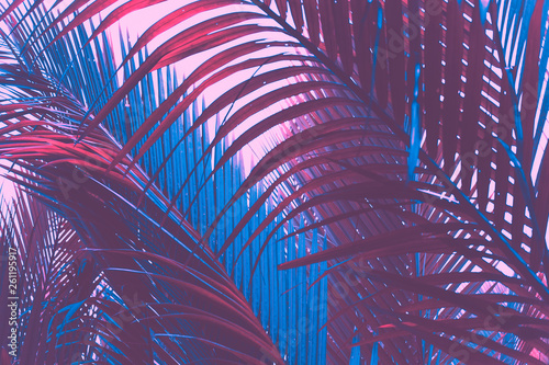 Poster Aubergine Copy space pink tropical palm tree on sky abstract background. Summer vacation and nature travel adventure concept.