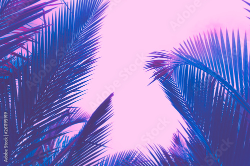 Poster Lilas Copy space pink tropical palm tree on sky abstract background. Summer vacation and nature travel adventure concept.