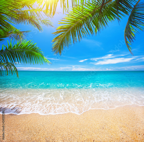 tropical beach with coconut palm Wall mural