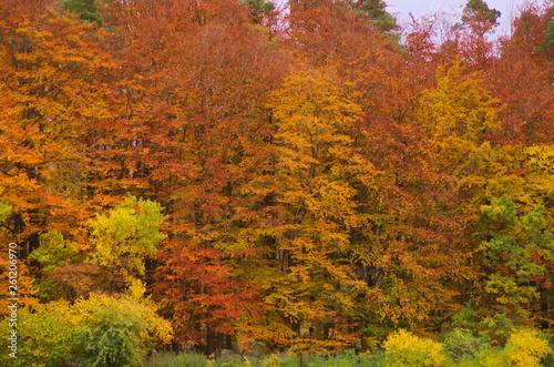 Fotografie, Obraz  bunter Herbstwald