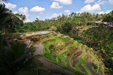 Fototapeta na wymiar rice terraces, Bali, Indonesia