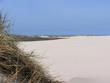 Wandering dune (Råbjerg Mile) in northern Denmark
