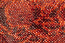 Texture Of Genuine Patent Leather Close-up, Embossed Under The Skin Of Bright Brown Reptile. For Modern Pattern, Wallpaper Or Banner Design