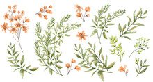 A Watercolor Drawing Of Branches With Leaves And Buds. Botanical Illustration. A Set Of Wild Herbs. Pink Wildflowers.