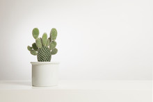 Cactus Plant In A White Flower Pot In A White Interior