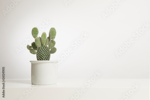 Spoed Foto op Canvas Cactus Cactus plant in a white flower pot in a white interior