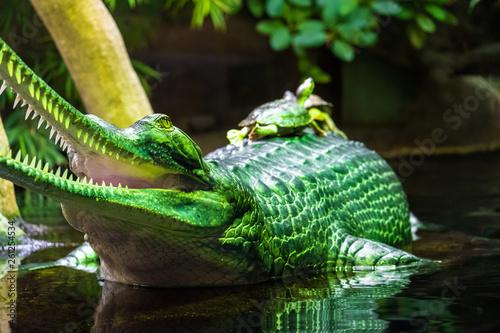 Cadres-photo bureau Cameleon Turtle on crocodile's back