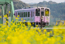 Local Purple Train Of Nogata H...