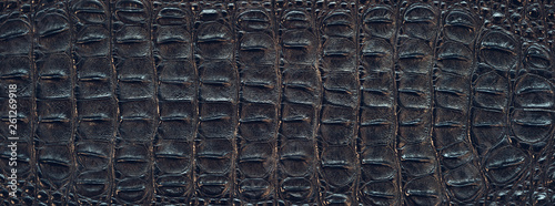 Photo Crocodile back skin texture