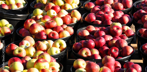 Fotografia, Obraz  The apple on market is a deciduous tree in the rose family best known for its sweet, pomaceous fruit, the apple