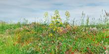 Panorama Of Wild Flowers