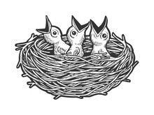Nestling Bird In Nest Sketch E...
