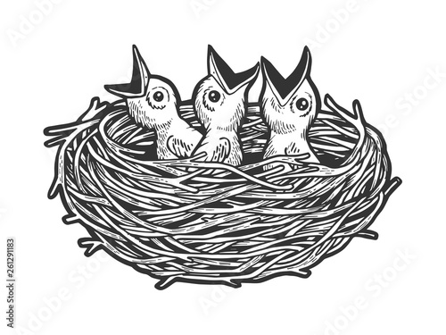 Fototapeta Nestling bird in nest sketch engraving vector illustration. Scratch board style imitation. Black and white hand drawn image. obraz