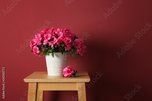 Fotobehang Azalea Pot with beautiful blooming azalea on table against color background
