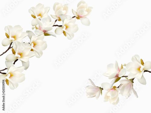 Beautiful blooming magnolia flower background.
