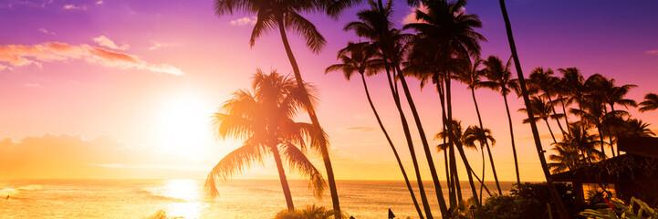 Dłoń drzewo sylwetka na tle tropikalnego słońca