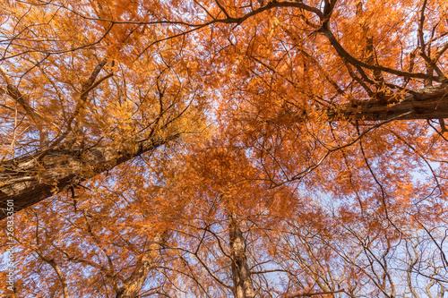 Fotografie, Obraz  JapanWoods