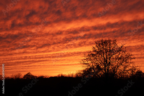 Pinturas sobre lienzo  Mackerel sky at sunset; vibrantly colored undulating clouds silhouetted by trees