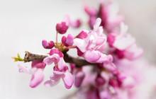 Closeup Of Delicate Pink Flowe...