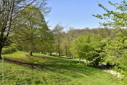 Tuinposter Wijngaard Pelouse entre les différents arbres sur l'un des versant du domaine de l'abbaye du Rouge-Cloître à Auderghem